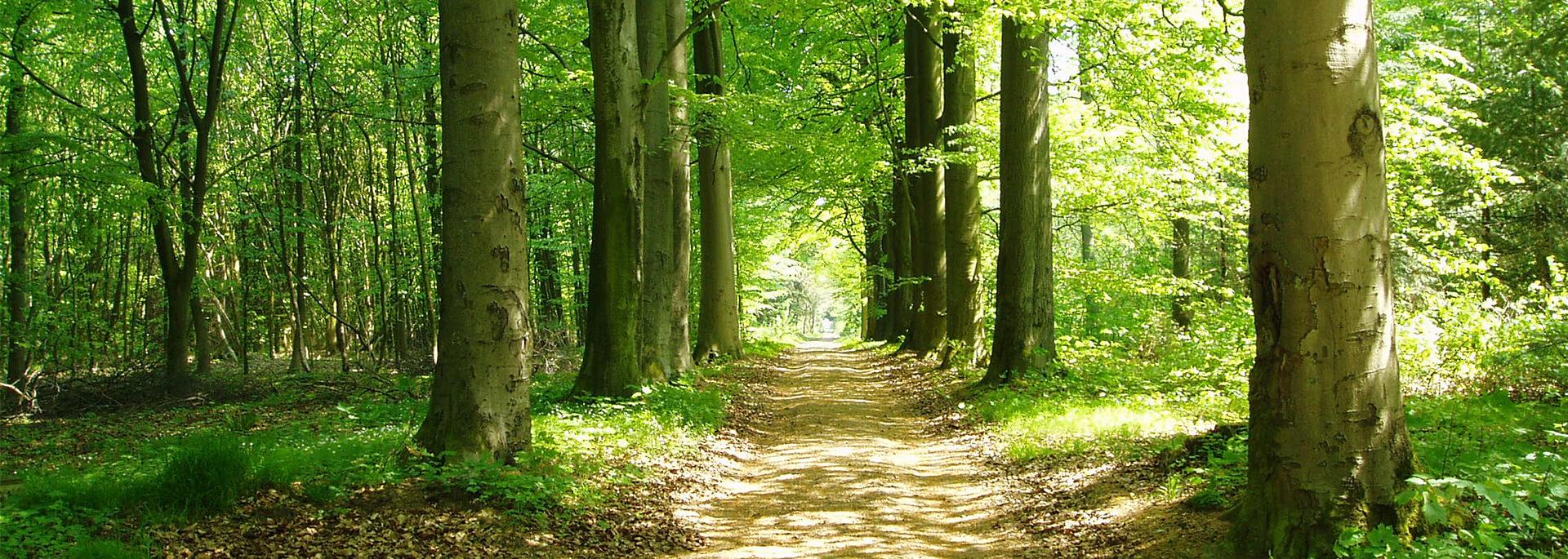Samtgemeinde-Hesel-Slider-Wald